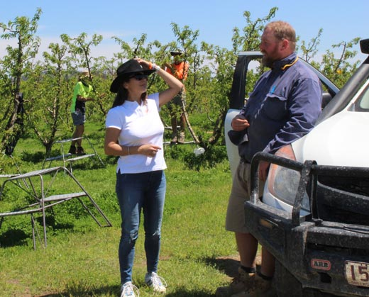 two pickers talking in orchard