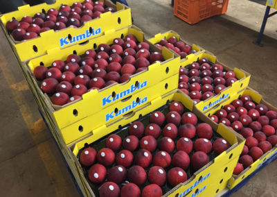Snow angel white peach in Kumbia trays