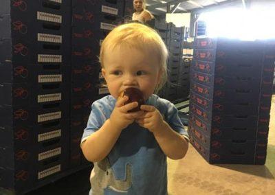 Toddler munching on a plum