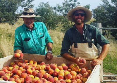 John & Nigel Pratt yellow nectarine harvest