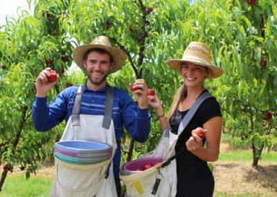 TJ & Ellen picking yellow peaches