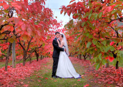 An Orchard Wedding