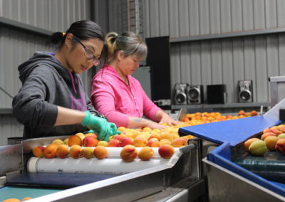 Sorting apricots