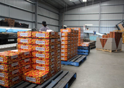 Stacked boxes of IM-SWEET apricots