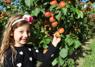 Zara in the family orchard