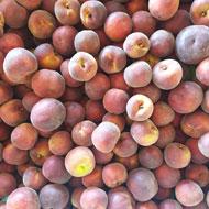 Kumbia peaches